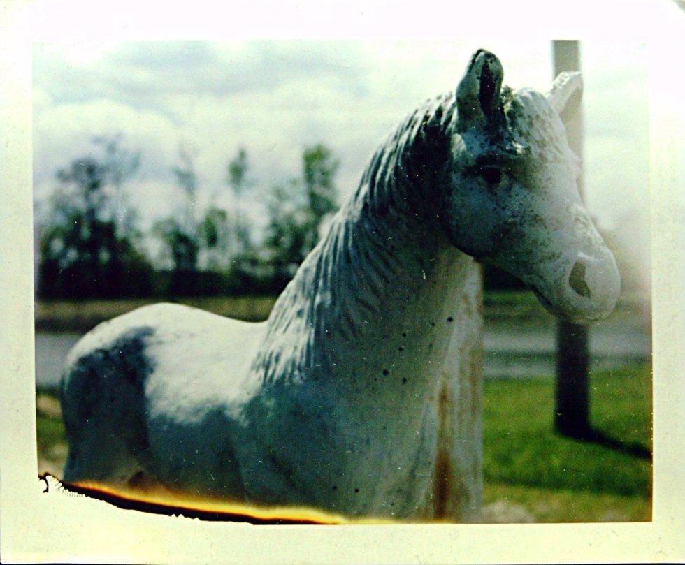 Pony Polaroid